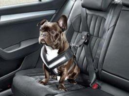 cinto de segurança nos cães