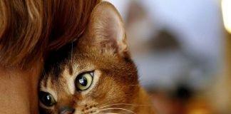 gatos têm uma péssima memória