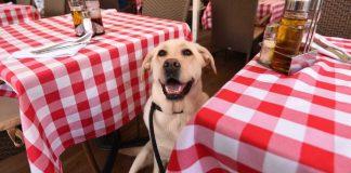 entrada de animais em restaurantes