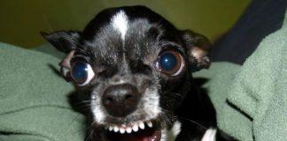 Adepto Sportinguista foi preso por treinar cão