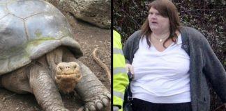tartaruga gigante mais velha do mundo