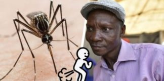 peidos podem matar mosquitos