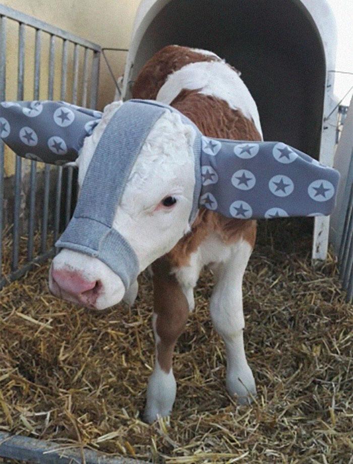 protetores de orelha para bovinos