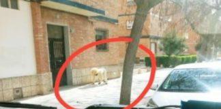 Homem espanhol fantasia-se de cão