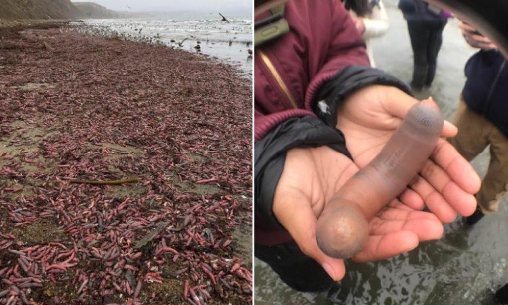 Peixes-mangalho dão à costa no rio Trancão