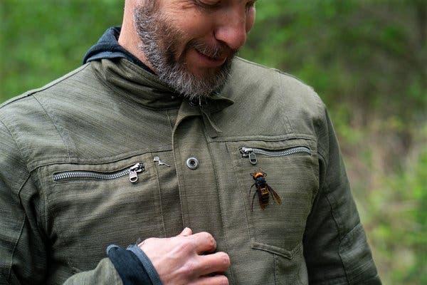 Praga de vespas assassinas gigantes