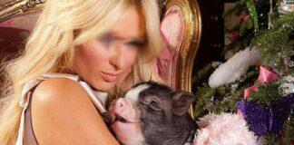 Mulher quer casar com o seu porco de estimação